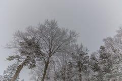 Snowy Mountains landscape ,Japan Stock Photos