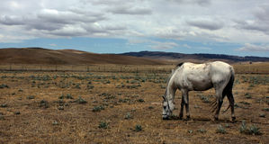 The snowy mountains in the outback of Australia. A single horse grazing in the snowy mountains of the outback of Australia Stock Photo