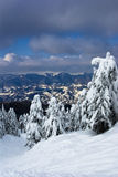 Snowy mountains and pine trees Stock Photography