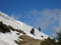 Snowy mountains in the summer Stock Images
