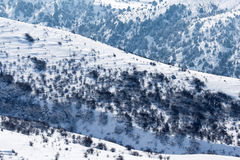 Snowy mountains of Tien Shan in winter Royalty Free Stock Photography