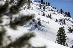 Snowy mountainside with fir trees Stock Image