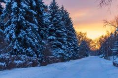 Snowy-Nadelbaum im Winter an der Dämmerung stockbilder