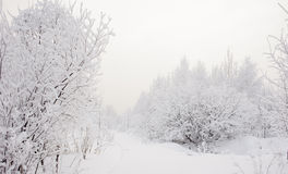 Snowy nature Stock Images