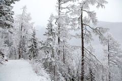 Snowy nature in High Tatras, Slovakia Royalty Free Stock Photography