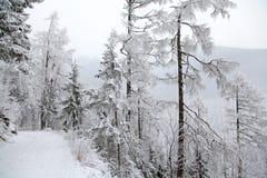 Snowy nature in High Tatras, Slovakia Royalty Free Stock Photography