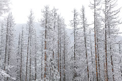 Snowy nature in High Tatras, Slovakia Stock Photography