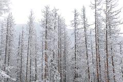 Snowy nature in High Tatras, Slovakia Stock Photography