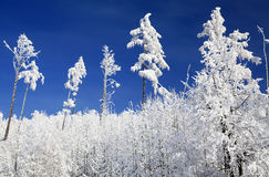 Snowy nature in High Tatras, Slovakia Royalty Free Stock Images