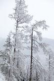 Snowy nature in High Tatras, Slovakia Stock Image