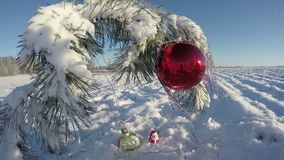 Snowy  New Year pine branch with Christmas bauble on field, time lapse 4K. Snowy beautiful New Year pine branch with Christmas bauble on field, time lapse 4K stock video footage
