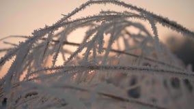 Snowy-Niederlassung in Winter Park bei Sonnenuntergang Nahaufnahme stock footage