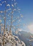 Snowy-Niederlassungen des Baums Lizenzfreies Stockbild
