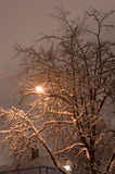 Snowy night tree and lantern in its braches Royalty Free Stock Photos