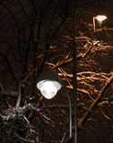 Snowy night tree and lantern in its braches. Dark light Royalty Free Stock Photography