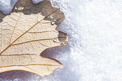 Snowy Oak Leaf Stock Photos