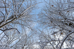 Snowy-Oberteile Bäume Lizenzfreie Stockbilder