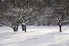 Snowy-Obstbäume Stockfotografie