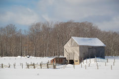 Snowy old barn with diagonal boards and barnyard landscape. Snowy old barn on a sunny day. Barnboards run diagonally and are grey, old and weathered. Shows some royalty free stock images