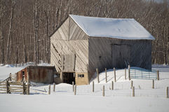 Snowy old barn with diagonal boards and barnyard landscape. Snowy old barn on a sunny day. Barnboards run diagonally and are grey, old and weathered. Shows some royalty free stock image