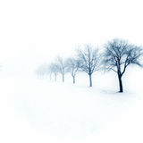 Snowy orchard Stock Photos