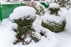 Snowy ornamental tree Stock Images