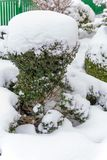 Snowy ornamental tree Royalty Free Stock Photography