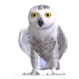 Snowy Owl Bird. 3D rendering with clipping path. And shadow over white Stock Photo