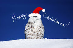 Snowy owl Christmas card. Funny snowy owl with hat, Christmas card Royalty Free Stock Images