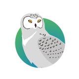 Snowy Owl Flat Design Vector Illustration Stock Image