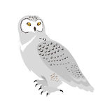 Snowy Owl Flat Design Vector Illustration Stock Images