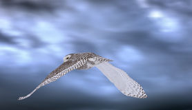 Snowy Owl in Flight Stock Photography
