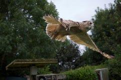 Snowy Owl Gliding Lizenzfreie Stockfotos