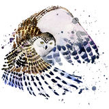 Snowy owl illustration with splash watercolor textured background royalty free illustration