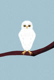 Snowy owl perching on branch Royalty Free Stock Photography