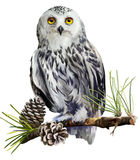 Snowy owl sitting on a branch Stock Image
