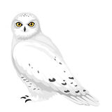 Snowy owl. Vector illustration. Stock Image