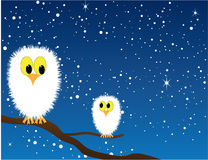 Snowy Owls. Vector cartoon of two snowy owls on a branch a night in the falling snow Royalty Free Stock Photography