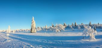 Snowy panorama, frozen trees in winter in Saariselka, Lapland Finland. Snowy panorama, frozen trees in winter in Saariselka, Lapland, Finland royalty free stock photography