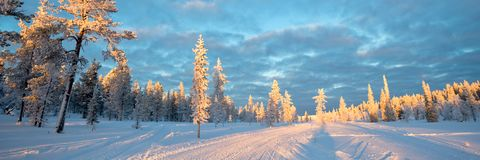Snowy panoramic landscape, frozen trees in winter in Saariselka, Lapland Finland. Snowy panoramic landscape, frozen trees in winter in Saariselka, Lapland stock image