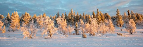 Snowy panoramic landscape, frozen trees in winter in Saariselka, Lapland Finland. Snowy panoramic landscape, frozen trees in winter in Saariselka, Lapland royalty free stock photography