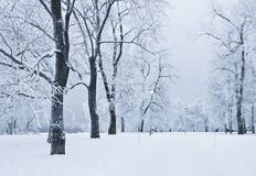 Snowy park Stock Photo
