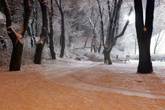 Snowy park. A beautiful park with light snow in the moments of dusk Royalty Free Stock Photo