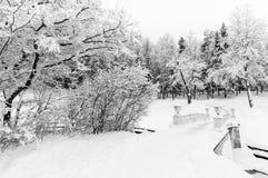 Snowy-Park Stockbild