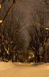 Snowy park alley during the night Royalty Free Stock Photo