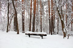 Snowy park Stock Images