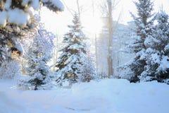 Sunny winter morning. Snowy park at January royalty free stock photos