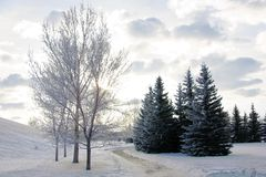 Snowy park landscape with frosty trees Stock Image