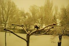 Snowy-Park lizenzfreies stockbild