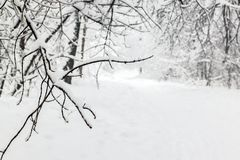 Snowy park after snowfall royalty free stock image
